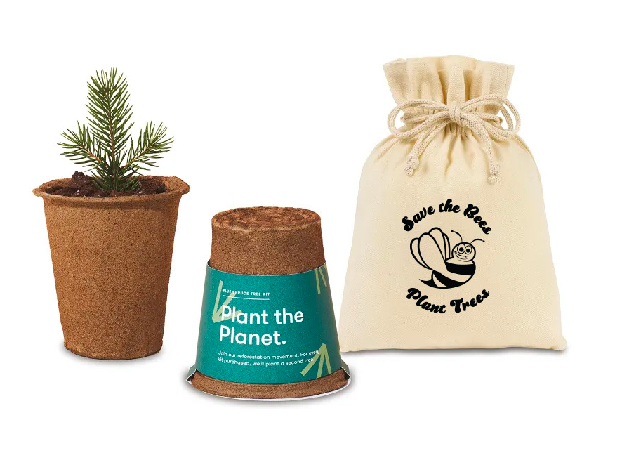 modern sprout tree planting kit