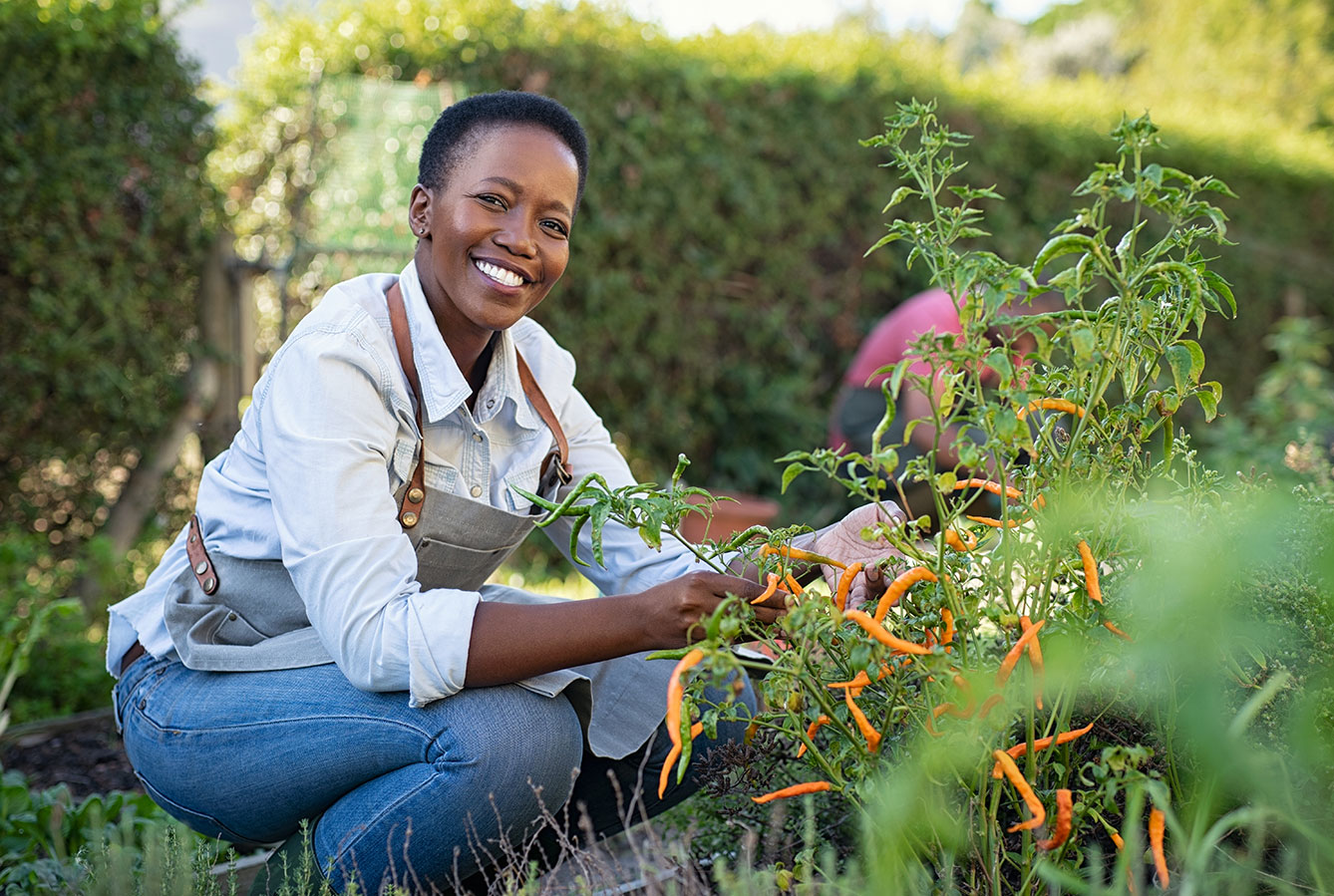 woman harvesting peppers in home garden